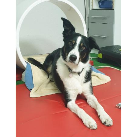PhysioMG 815 - aparat do magnetoterapii zwierząt