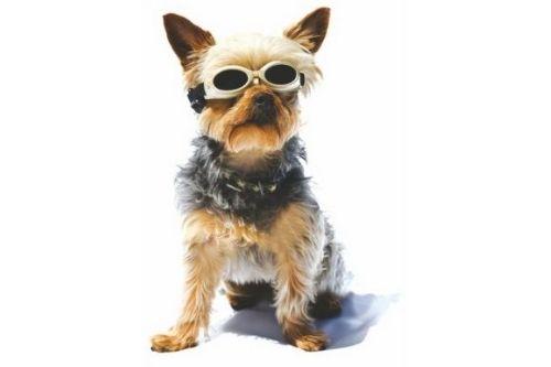okulary ochronne dla psa