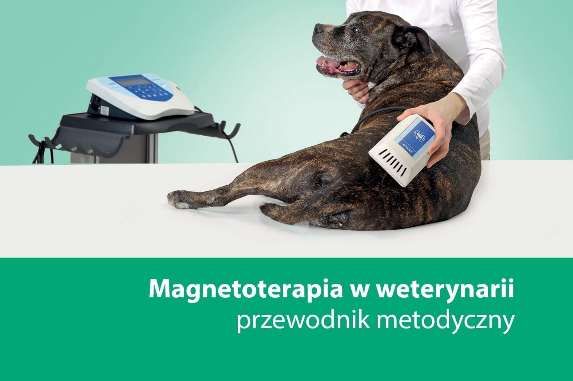 magnetoterapia w weterynarii