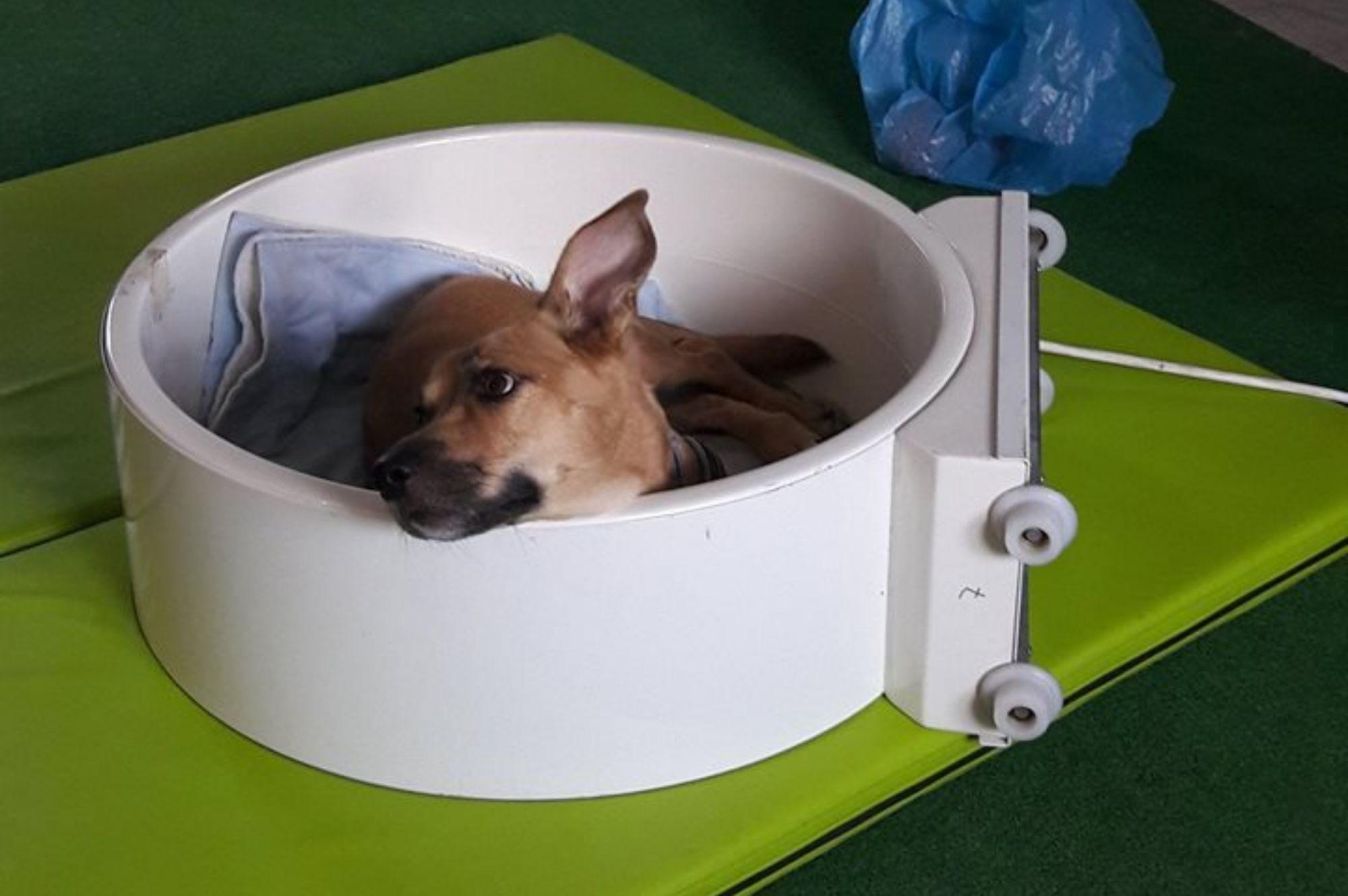 magnetoterapia u zwierząt